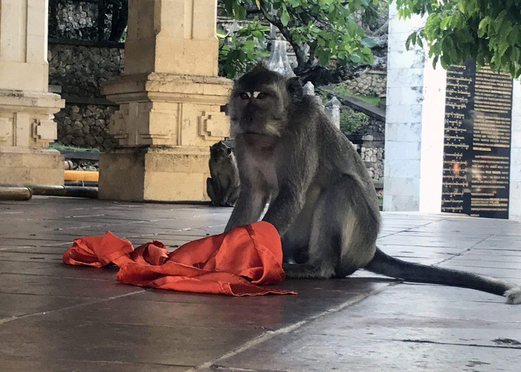 Uluwatu Temple Monkey