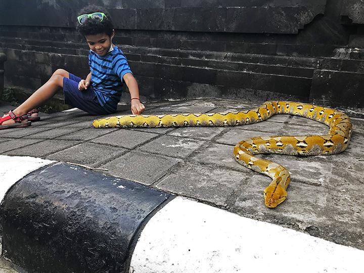 Tanah Lot Python
